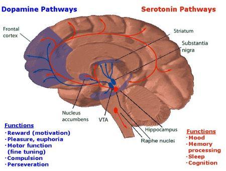 role-dopamine.jpg